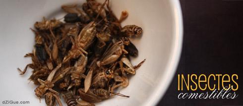 Manger des insectes : Deuxième essai !