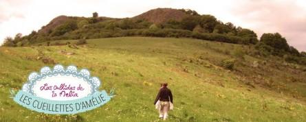 Les cueillettes d'Amélie : les plantes du Cantal en tisanes